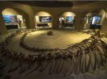 Egipto abre museo de fósiles marítimos y cambio climático